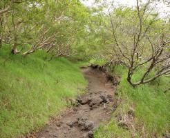須走ルート新六合目から本六合目の登山道