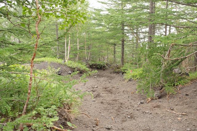 須走ルート下山道:砂払い五合目-須走口五合目