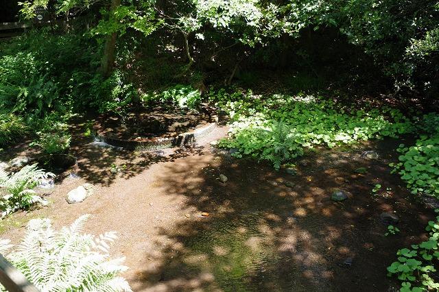 柿田川公園の富士山の湧水