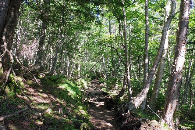 須走ルートの登山道の写真08