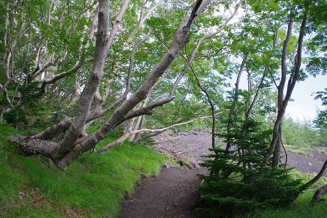 須走ルートの登山道の写真10