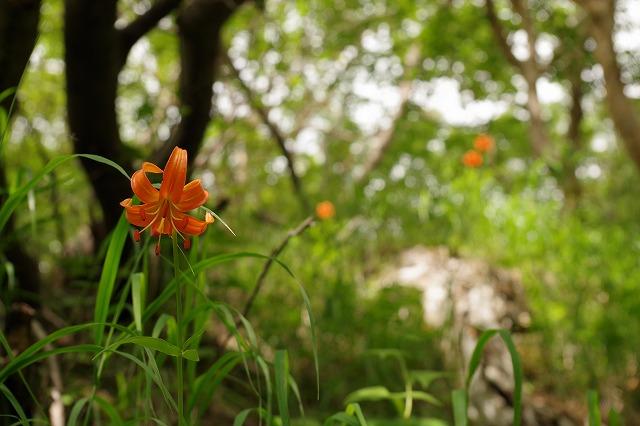 須走ルートの登山道の写真13