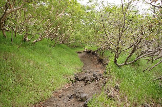 須走ルートの登山道の写真17